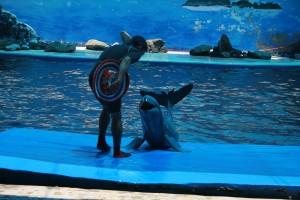 Happy Dolphin Thailand