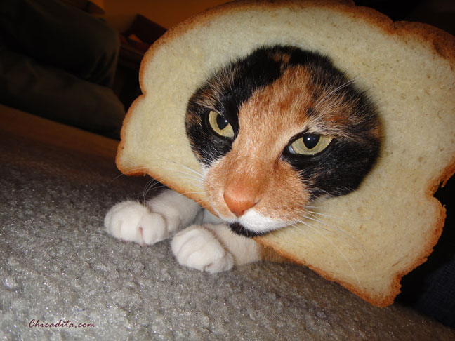 Mika Neko In-Bread Cat 1