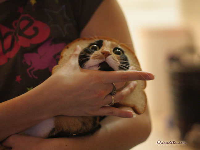 Mika Neko In-Bread Cat 2