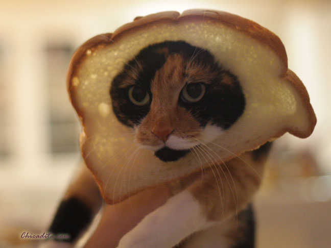 Mika Neko In-Bread Cat 3
