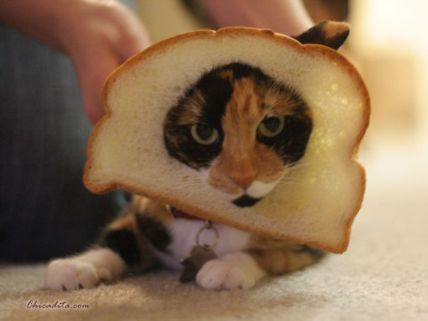 Mika Neko In Bread 4