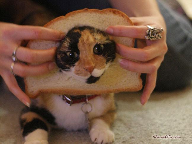 Mika Neko In-Bread Cat 6