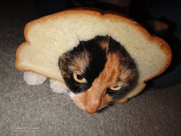 Mika Neko In-Bread Cat 7