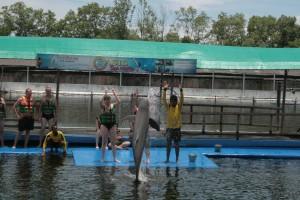 Thailand Dolphin Jump Command
