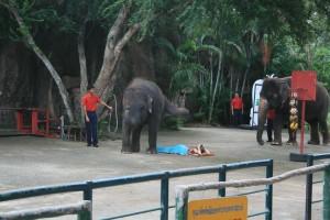 Elephant Zoo Thailand