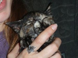 akiko the kitten sucks her paw